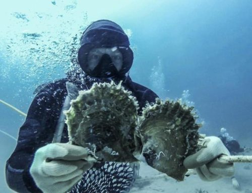 The World is Australia's Sustainable Pearl Oyster